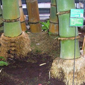 夢の島熱帯植物館200903
