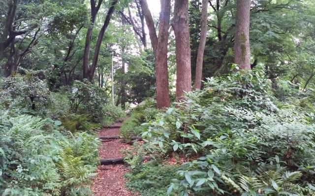 shimizukou_park2