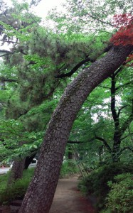 shimizukou_park3