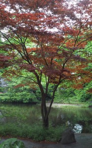 shimizukou_park4