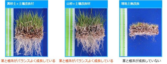 茎と根系の成長の違い